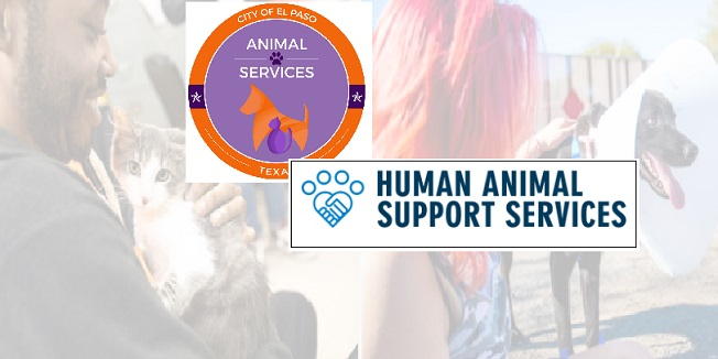 Animal Services joins national pilot program aimed at keeping families and pets together